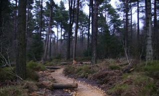 Dalby Forest, Mountain Bike Trail